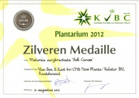 mahonia-soft-caress-zilver-2012